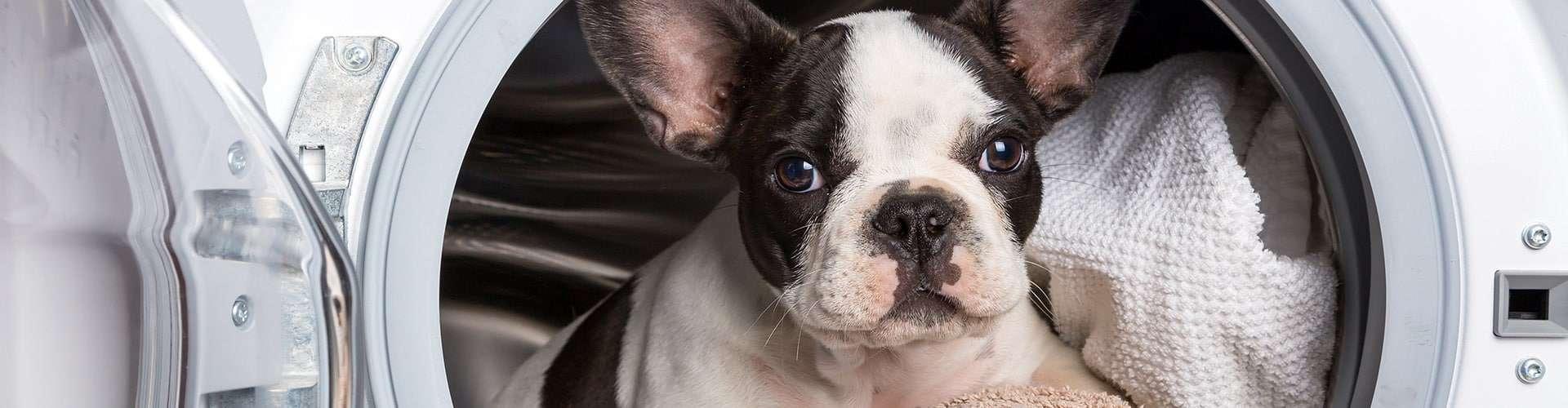 dog ear cleaning geneva, il