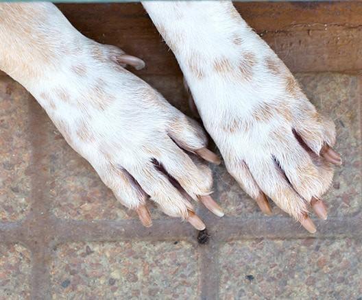 dog nail grinding geneva, illinois woofbeach palms