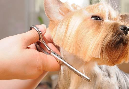 geneva, il dog grooming