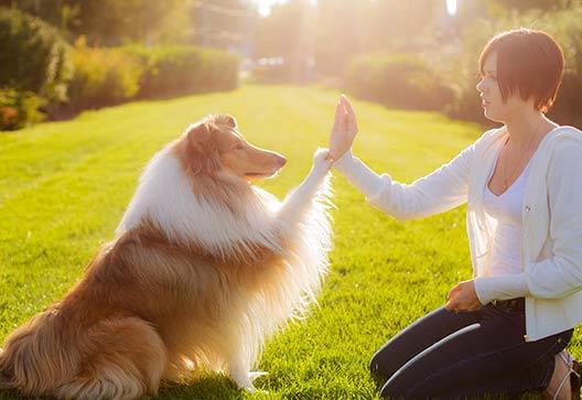geneva, il dog training