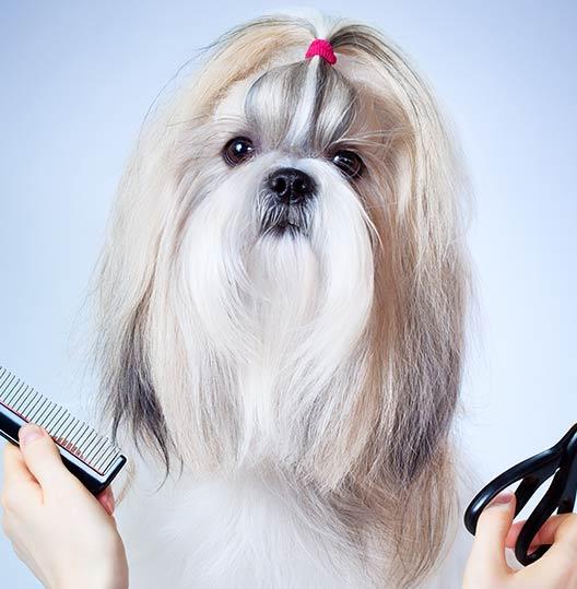 illinois woofbeach dog grooming geneva, il